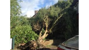 Fallen tree in Dartford, Kent