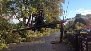 Fallen trees across Milley Road in Waltham St Lawrence