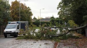 Fallen tree in Emmer Green