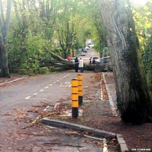 Fallen tree blocking Cheriton Road in Winchester