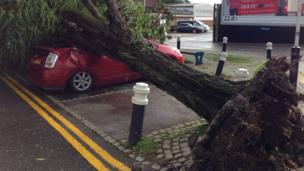A car under an uprooted tree in Ascot
