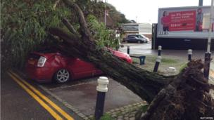A huge uprooted tree smashes onto the roof of a car in Ascot. Photo: Matt Myers