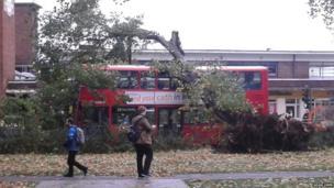 A tree lands on top of a bus. Photo: Adam Uren