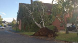 A tree is uprooted and rests on the roof of a nearby house in Martlesham Heath, Ipswich. Photo: Colin Moore