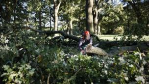 A worker uses a chainsaw on a fallen tree in Hartley Wintney, Hampshire, west of London (28 October 2013)