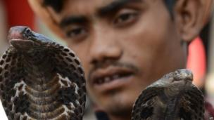 An Indian snake charmer poses with his cobras