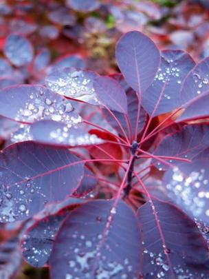 Rain drops on a plant