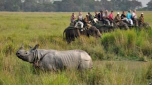 Tourists in India photograph a rhinoceros during an elephant safari at Kaziranga National Park, which has re-opened for tourists (1 November 2013)
