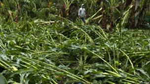Farmer looks at damaged crops
