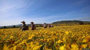 Farmers walk through a field in Aung Ban in Burma's northeastern Shan state