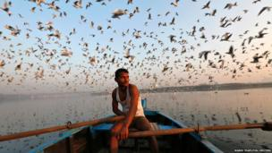 Migratory birds fly above a man rowing a boat