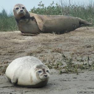 Sandwich seals