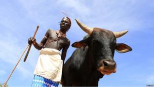 A Samburu warrior - known as a moran - stands next to a fattened black bull in northern Kenya - Thursday 21 November 2013