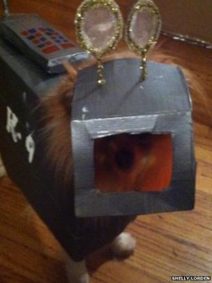 Dog in K9 costume. Photo: Shelly Lorden