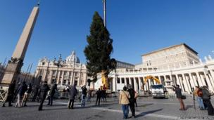 Workers erect a Christmas tree in St Peter's Square at the Vatican