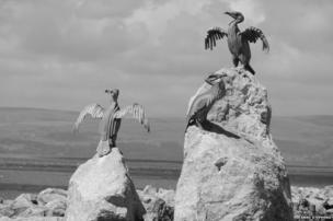 Cormorant statues at Morecambe