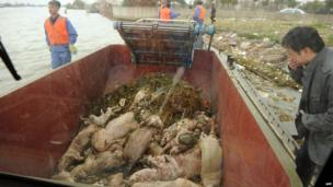 A photo taken through the window on a boat shows dead pigs collected by sanitation workers from Shanghai's main waterway on 11 March 2013