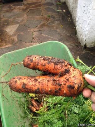 Carrot. Photo: David Martin