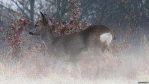 Deer: Photo: Peter Hunter