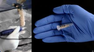 Extraction of fossil DNA (deoxyribonucleic acid). Sample of material drilled from a fossilised Homo heidelbergensis femur (thigh) bone (femur 13) found at the Sima de los Huesos site, Sierra de Atapuerca, Spain.