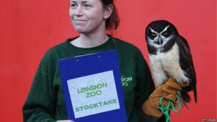 A keeper holds Elton, a spectacled owl, during ZSL London Zoo's annual stock take