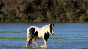A horse standing in shallow water in a flooded field