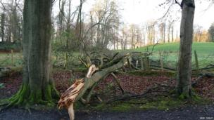Inland, the winds caused damage to buildings and trees, as this picture by Brid Turley of a fallen tree in Lady Dixon Park shows.