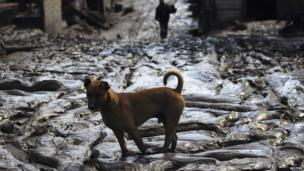 Dog stands in mud