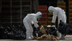 Workers place dead chickens into plastic bags after they were killed at the Wholesale Poultry Market in Cheung Sha Wan, Hong Kong, on 28 January.