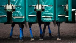 Horses wait in the gates during early morning training at Sha Tin Racecourse in Hong Kong