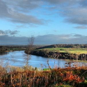 Western Cleddau from Little Milford Wood