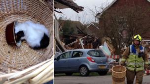 Guinea pig rescued from rubble of explosion in Clacton