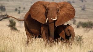 An elephant and a calf in Tsavo West National Park, Kenya - Tuesday 4 February 2014