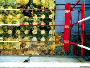 Inside the boxing ring