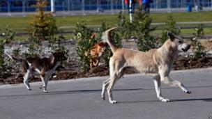 Stray dogs around the Olympic Park in Sochi, Russia