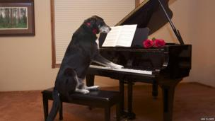 Buzz playing the piano