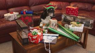 Buzz wrapping presents