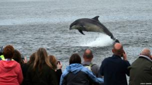 Dolphin picture taken at Chanonry Point, Fortrose.