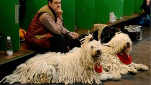 A man sits with his Komondor dogs at the Crufts dog show in Birmingham, England