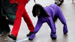 Dog in a purple coat