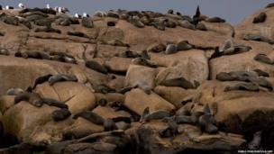Fur seals rest at Isla de Lobos