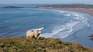 Ela Fraczkowska, from Cardiff, took this photo of Rhossili on Gower, where she and her husband went for a lovely walk
