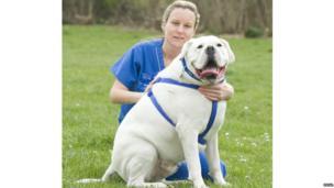 Bulky Boxer dog Diesel