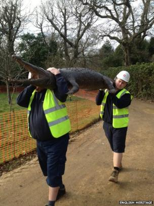 Crocodile being carried to Swiss Cottage