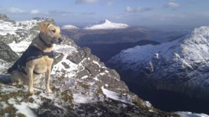 Dog on mountain