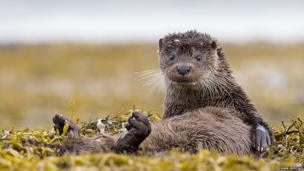 An otter in image Will You Rub My Feet? by Mark Medcalf