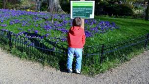 Flowers, Regent's Park, London