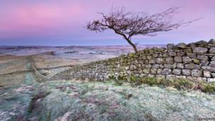 Little tree on Hadrian's Wall near Caw Gap by Anita Nicholson