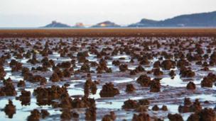 Low tide in Swansea Bay