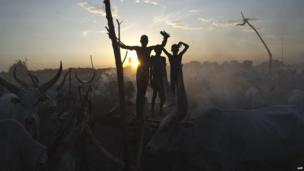 Boys with cattle in Terekeka, South Sudan - Sunday 13 April 2014